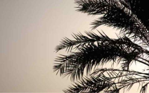 ナツメヤシの葉シルエット